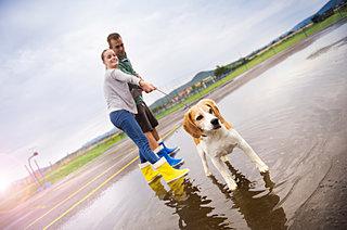 雨の日、犬のお散歩とお手入れどうしていますか?