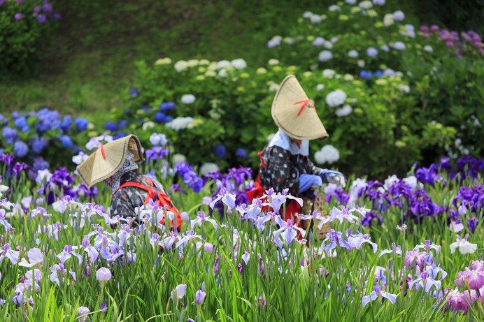 花菖蒲がそろそろ見ごろ!関東の観賞スポット〈レジャー特集|2018〉