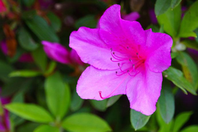 「紅花」はベニバナのことではなかった⁉七十二候「紅花栄」