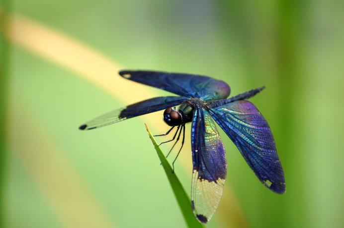 好き?嫌い?6月4日は「虫(ムシ)の日」。昆虫の季節の到来です