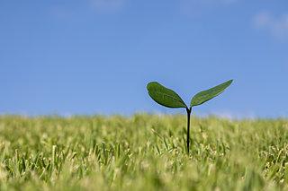 土・空気・水を循環している窒素。窒素の増加は環境的にはどうなの?