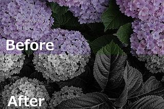 パッとしない紫陽花写真を10分で印象的にしあげるテクニック