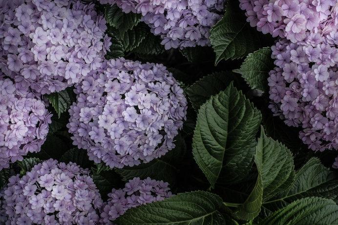 ④花(ガク)にハイライトを入れた写真