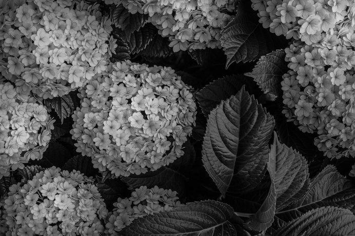 ⑤色を抜いてモノクロにした写真