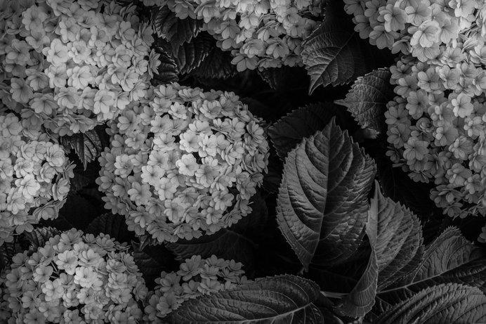 ⑥葉の葉脈にハイライトを入れた写真