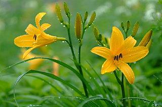 夏の高原は花々の宝庫~季語「お花畑」と高山植物の楽しみ