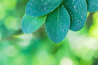 「知って得する季語」。秋だけじゃない梅雨が旬のキノコって?