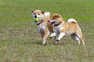 愛犬受け入れOKのレジャー施設へGO!〈レジャー特集│中国・四国編〉