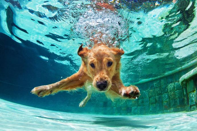 夏場に実践したい!愛犬のひんやりお手入れ方法