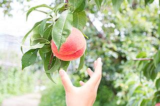 夏のフルーツ狩りしませんか♪首都圏から行けるおすすめスポット〈東日本編|レジャー特集2018〉