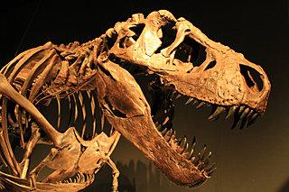 恐竜に会いに行こう!!この夏おすすめの恐竜イベント♪〈レジャー特集2018〉