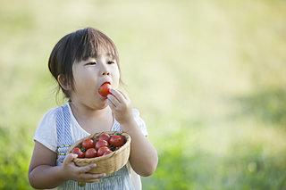 トマトが赤くなると医者が青くなる!?今が旬のトマトの歴史と栄養価
