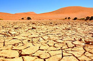 7月25日は「最高気温記念日」。世界でも異例の猛暑を記録中!今すぐ対策が必要です