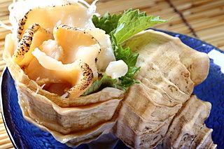 北海道・日高のつぶ貝が巨大すぎ!! コリコリの刺身がおいしい真つぶを食べてみよう