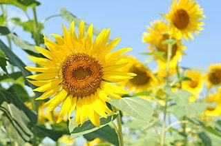 夏真っ盛りの気分を凝縮させた ──8月の詩歌