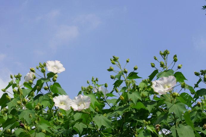 「葉月」のはじまり、夏まっさかり、酷暑の中に涼を求める時節_画像