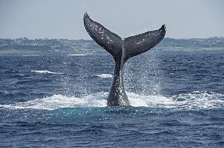 海に親しむこの季節に考えるクジラ・そしてマリンデブリのこと
