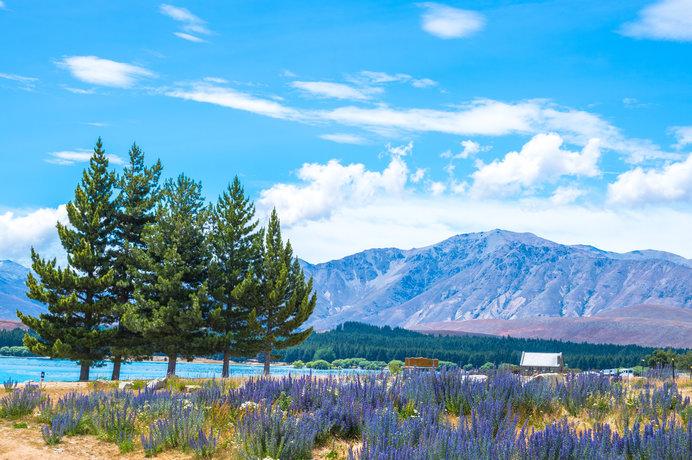 ニュージーランドの名所「テカポ湖」