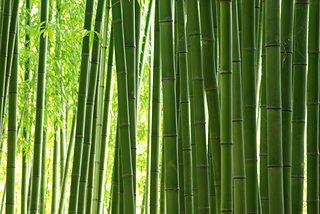 「知って得する季語」秋なのに春!?秋の季語「竹の春」の不思議