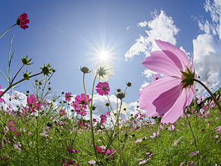 「知って得する季語」秋の風イロイロ。秋の風の名前を知ろう!