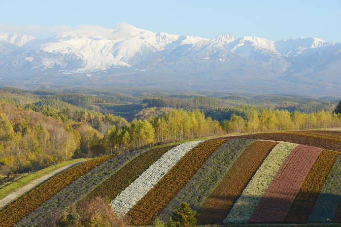 秋色の美瑛の丘と十勝岳連峰