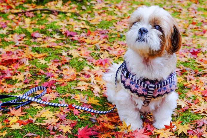 気をつけてあげたい!秋冬にかかりやすい犬の病気と予防