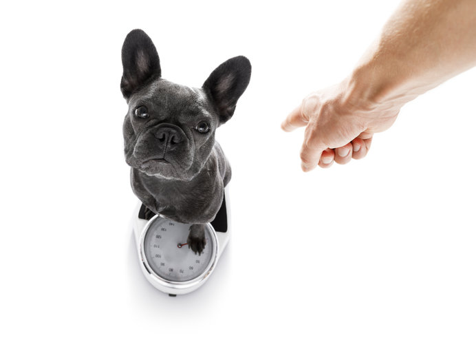 毎月体重測定して、愛犬の体重の変動を把握しておきましょう。