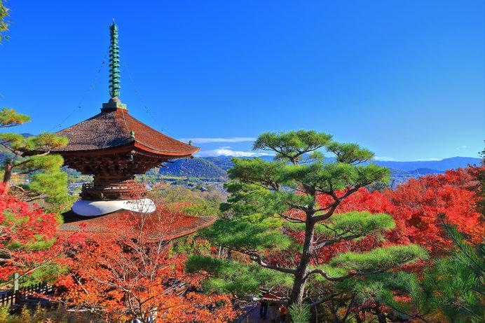 澄み渡った秋空に、常寂光寺の紅葉が映えます!