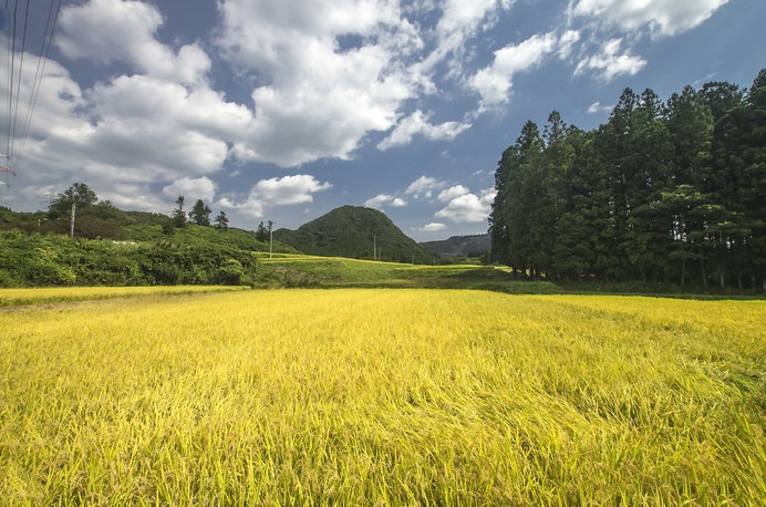 七十二候≪水始涸(みず はじめてかる)≫日本人とお米のうるわしく、愛おしい関係!