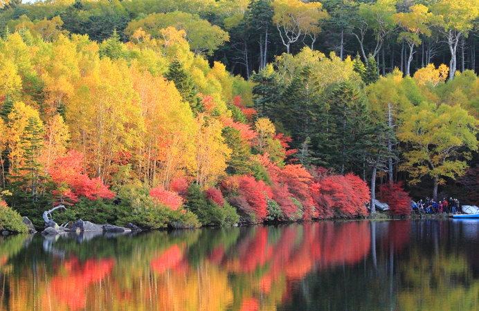 絢爛でありながら寂し気な紅葉 ──「かえる手」の楓、他いろいろ
