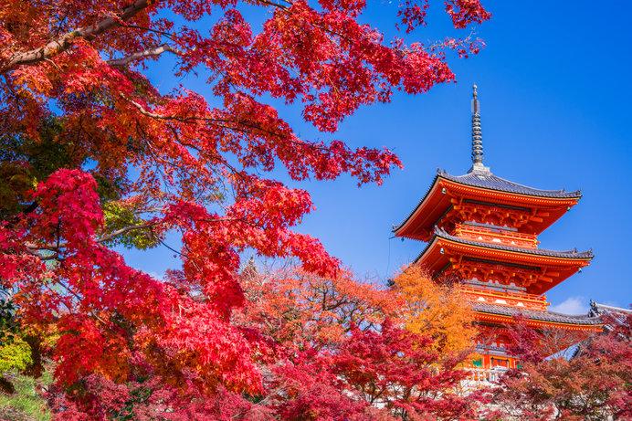 京都のお寺といえば、清水寺が有名です!