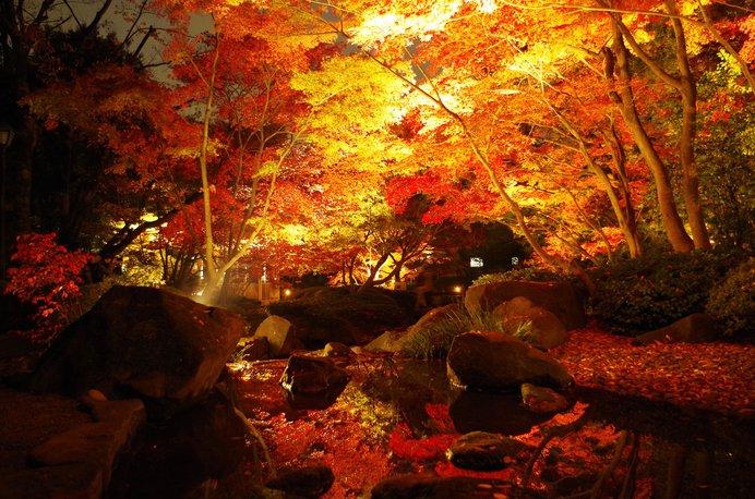 ライトアップされた紅葉を見に行こう♪東京編〈レジャー特集|2018〉