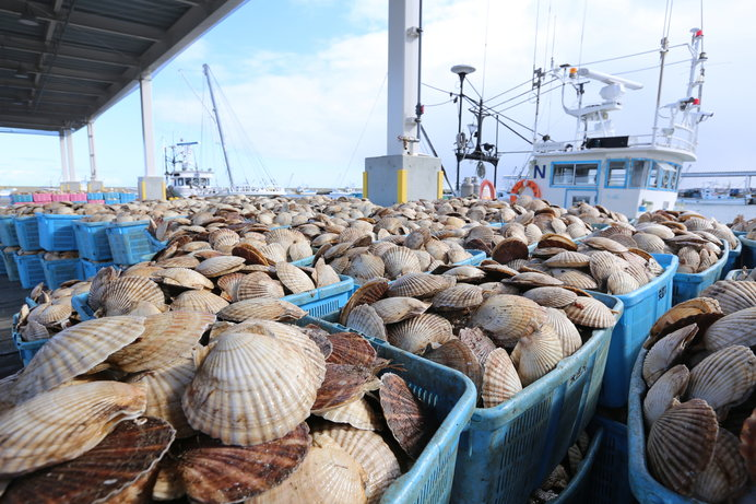 北海道 ホタテの養殖。「獲る漁業」から「育てる漁業」へ