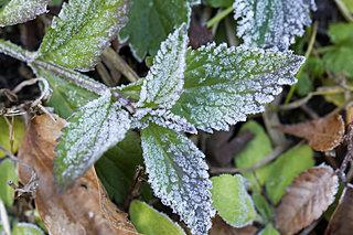 深まりゆく秋、二十四節気は「霜降」がめぐってきました