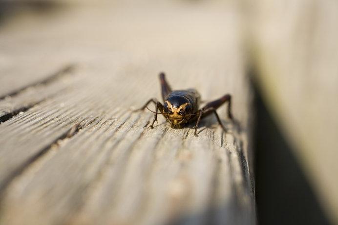自由度高すぎ!昆虫の「耳」の多様性