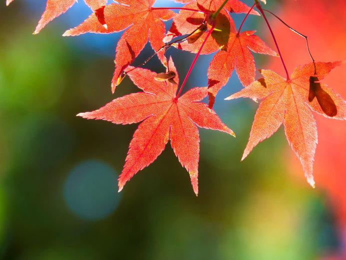 秋の彩りといえば