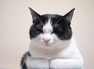 """スリスリ、ふみふみ、しっぽピーン。猫のしぐさの""""オノマトペ"""""""