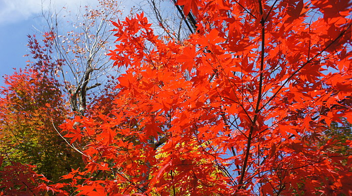 茨城県のシンボルのひとつ「筑波山」