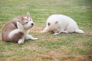 さて、どうする?〈愛犬のノミ・ダニ予防4つの方法〉