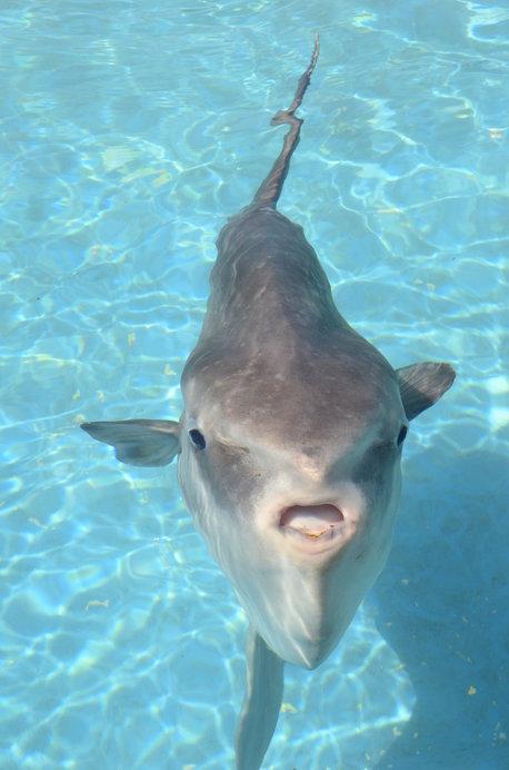 白い舌のようなパカパカは「水止膜(すいしまく)」