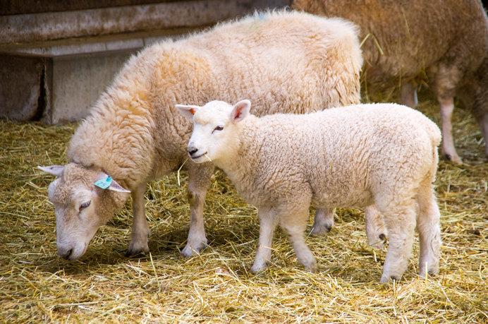 イルミネーションだけじゃない! 動物たちともふれあえる「マザー牧場」は癒しがたくさん!