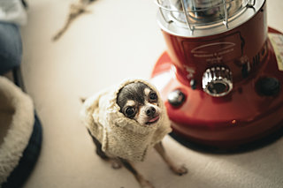 〈愛犬の冬の寒さ対策〉……どうしていますか?