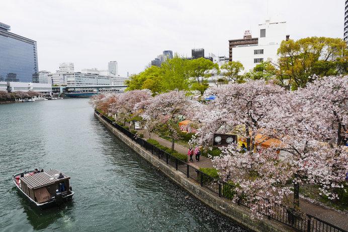 大阪の桜の名所で人気の「造幣局の桜の通り抜け」