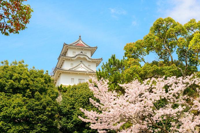 桜と城の共演、日本100名城の「明石城」