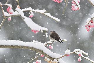冬から春へ!「土用」にあたる今、知っておきたい体を整える食養生