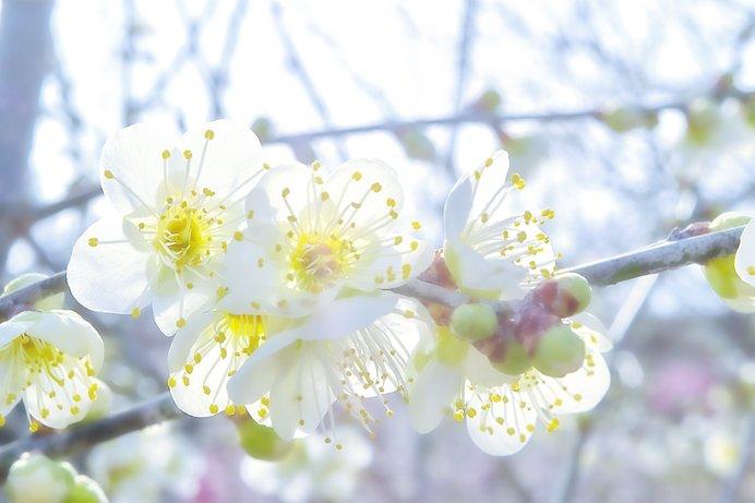「知って得する季語」──キラキラだらけの「早春」の季語