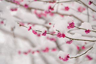 二月の古名「如月」、またの名は「梅見月」。春遠からじと咲くこの花の季節