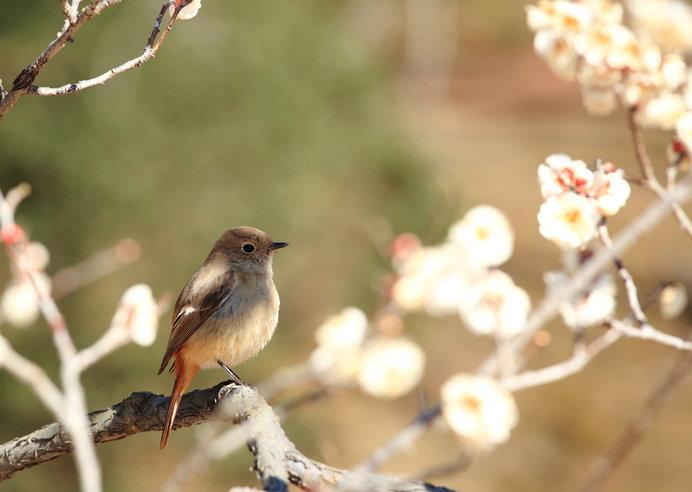 難波津に咲くやこの花 冬ごもり今を春べと咲くやこの花