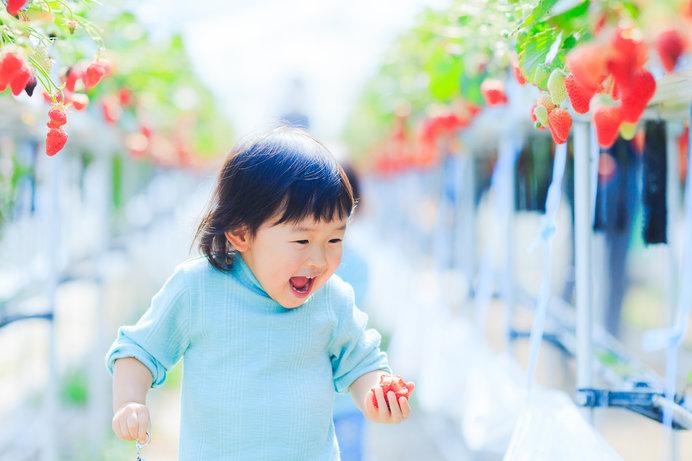 甘いいちごがいっぱい! 子どもも大興奮のいちご狩り ※画像はイメージ