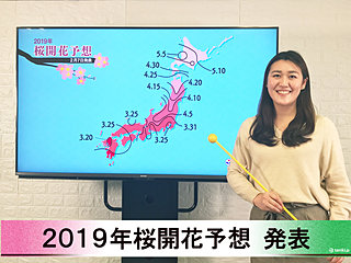 【動画で解説】日本気象協会から第1回2019年桜開花予想発表!